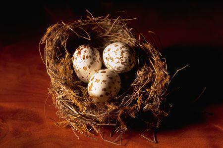 Bird�s nest with three eggs