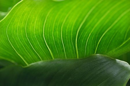 Detail close up view of underside of Green Leaf