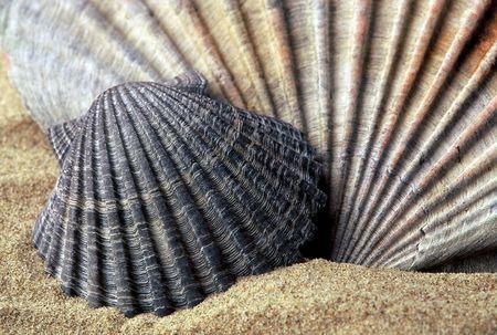 Close up still life of Sea Shells on the beach