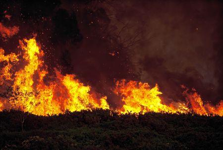 Fire burning wild through bushland