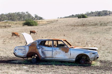 burnt out: Burnt out vandalised car in field with cows