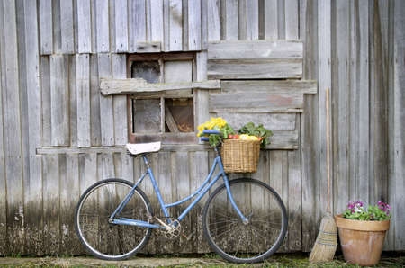 flower market: Old Blue ladies bicycle leaning against a weatherboard barn Stock Photo