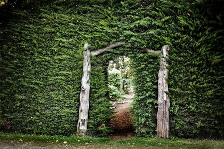 garden frame: View through large hedge wall into another garden