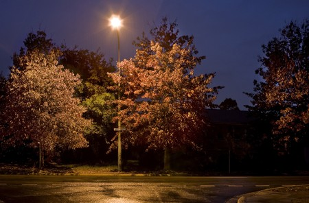 Night scene of a suburban street with Autumn trees and streetlight Stock Photo - 7759252