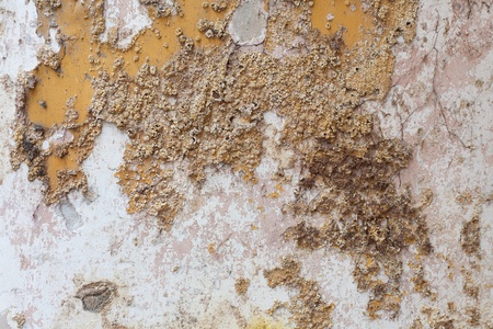damp: Close up detail of salt damp texture on exterior building wall, also known as rising damp