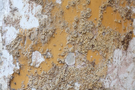 Close up detail of salt damp texture on exterior building wall, also known as rising damp Stock Photo - 9700834