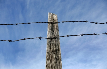fencing wire: A view of rusty barbed wire attached to a timber post
