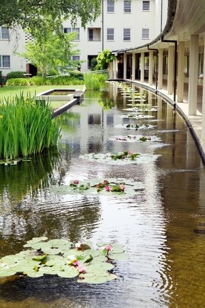 watergarden: A pond with water lillies running around the exterior of a building