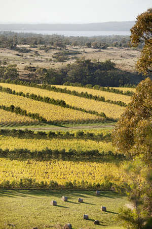 Beautiful scenic of vineyards in Autumn, Oyster Bay, Tasmania, Australia Stock Photo - 13654874
