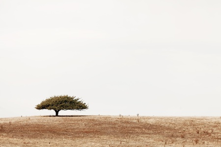 denuded: Scenic view of landscape with lone tree on a small hill Stock Photo