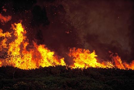 bushfire: Wild bushfire burning out of control in native bushland