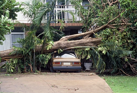 Very large tree that has fallen over onto a car during a Cyclone