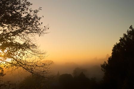 newzealand: Sunrise through trees on a foggy morning, Hamilton, North Island, New Zealand Stock Photo