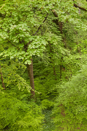 cardiff: Lush vibrant green forest near the Welsh capital of Cardiff