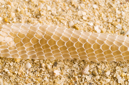 left behind: Close up detail of shedded snake skin left behind by snake on the beach
