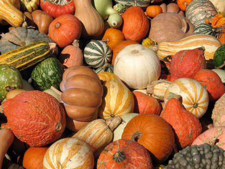 jackolantern: Pumpkins and gourds