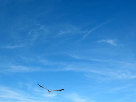Seagull in sky photo