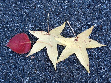 Leaves on asphalt photo