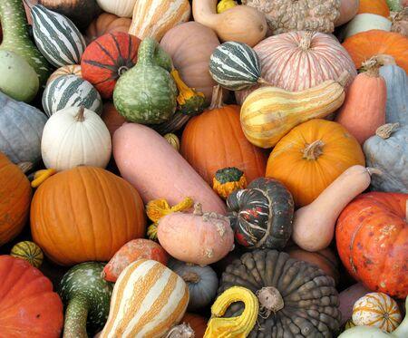 Pumpkins and gourds photo