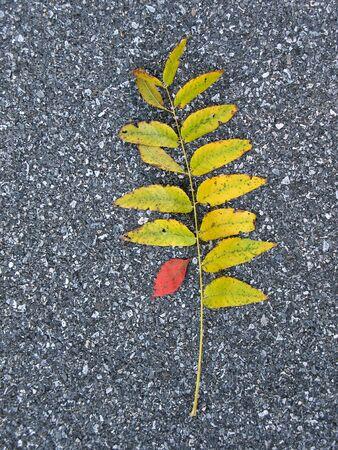 Leaves on asphalt in fall photo