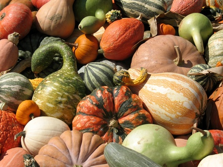 Pumpkins and gourds photo