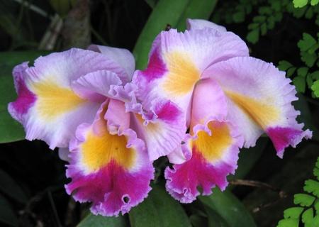 flores exoticas: Orqu�deas Foto de archivo