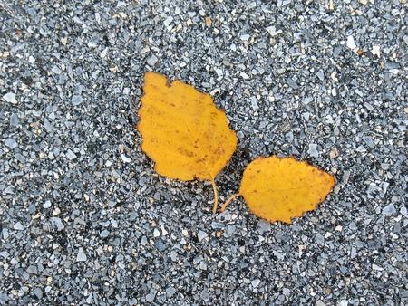 Leaf on asphalt in fall photo