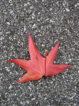 Leaf in fall photo