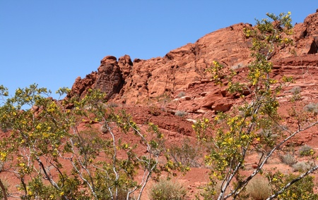 protectorate: Rocks of Valley of Fire Nevada