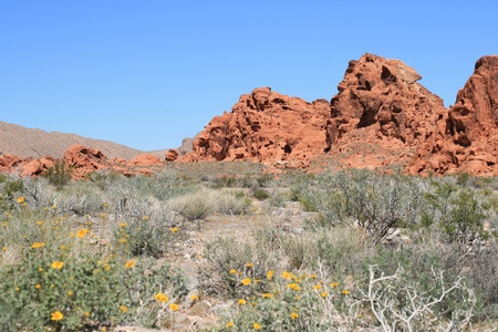 agricultural essence: Rocks in Valley of Fire Nevada Stock Photo