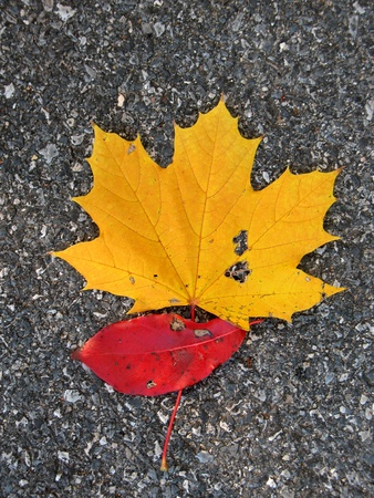 Leaves on asphalt in fall photo