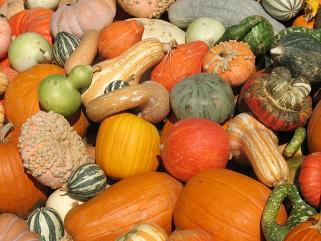 Harvested pumpkins and gourds Stock Photo - 12009737