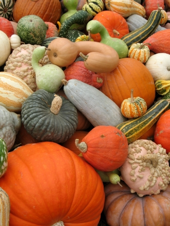 gourds: Harvested pumpkins and gourds