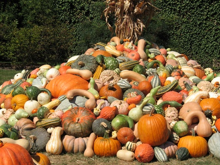 Harvested pumpkins and gourds photo
