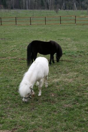 Pony at farm photo