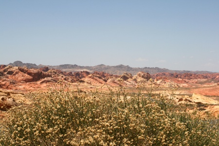 protectorate: Rocks in Valley of Fire State Park Nevada