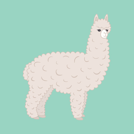 llama: Cute furry alpaca. Vector illustration eps10.