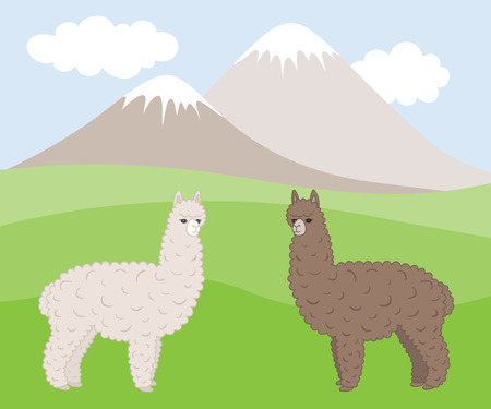 mountain meadow: Dos peludos alpacas de diferentes colores lindos en un prado de la monta�a. Ilustraci�n del vector eps10.