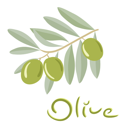 Green olives on a branch with leaves. Vector illustration.