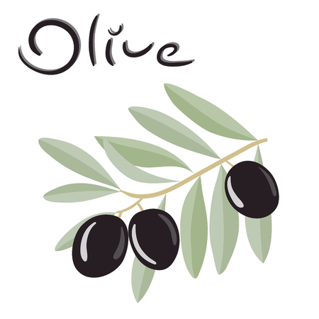 appetizers: Black olives on a branch with leaves. Vector illustration.