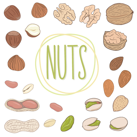 Nut collection. Set of walnuts, almonds, pistachios, peanuts, hazelnuts, whole and shelled. Mix of different nuts. Vector hand drawn illustration. Ilustração