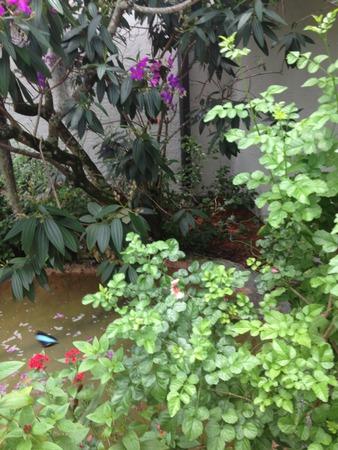 atrium: Butterfly Atrium