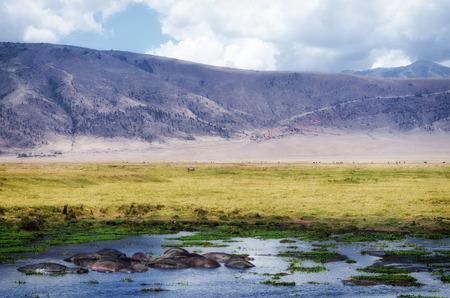 カバ ンゴロンゴロ クレーターの小さな池で休憩します。 写真素材