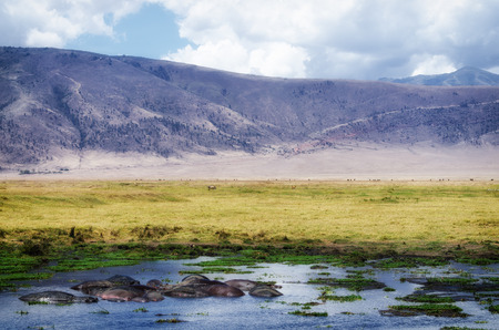 Hippos resting in a small pond in the Ngorongoro Crater. Banco de Imagens - 28728514