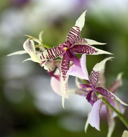 Hi-res orchid Stock Photo