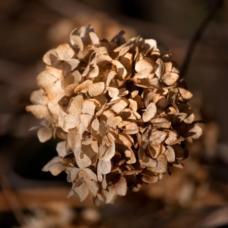Dry flower Stock Photo