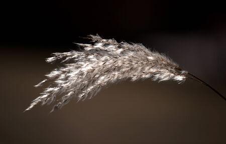Sunlit dry blade on dark background