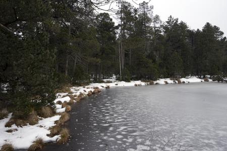 Dark snow forest with frozen lake