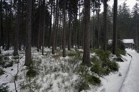 Path in the dark snow forest, Jeseniky, Czech republic