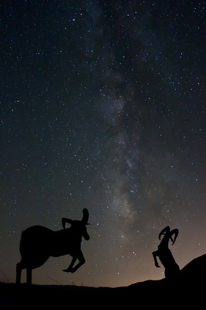 Statues of Bighorn Sheep with the Milky Way in the Background. Galleta Meadows in the Anza-Borrego Desert photo
